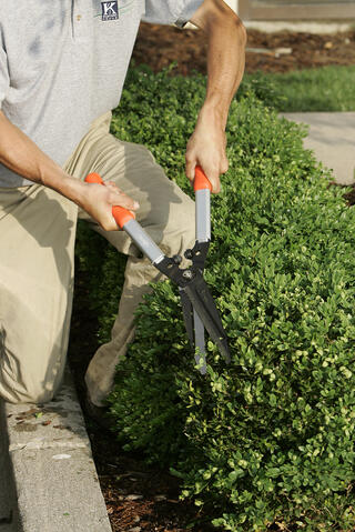 pruning for safety