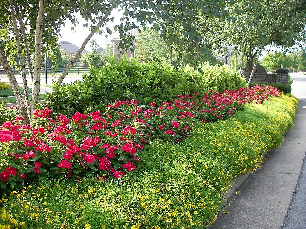 The best summer annuals for kentucky our top 8 choices best summer annuals for ky izmirmasajfo Gallery