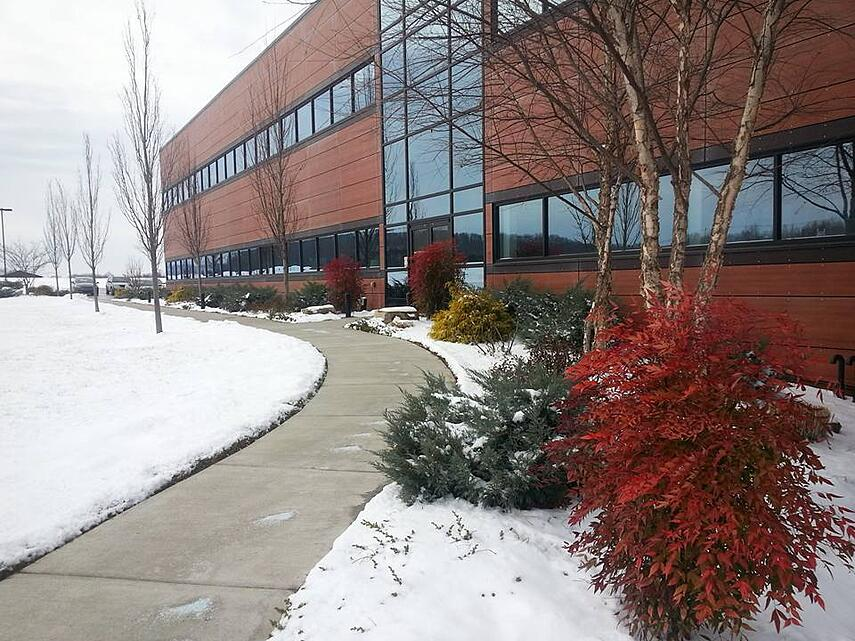 landscaping in winter
