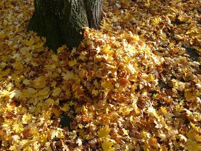 pile of leaves improving soil