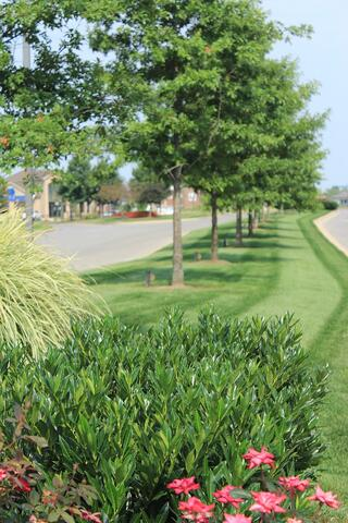 commercial landscaping - lawn care