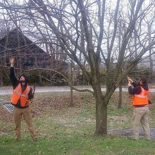 branch-removal.jpg
