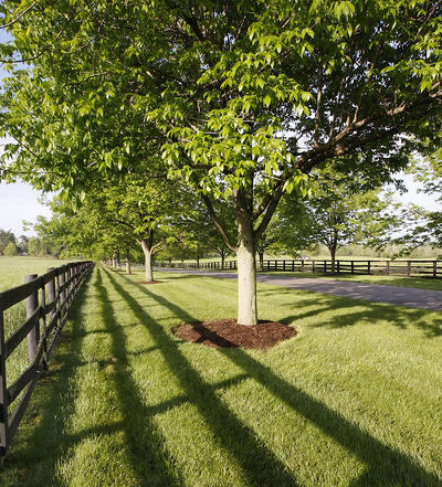 Large, symmetrical mulch bed around your trees helps protect the trees' trunks.