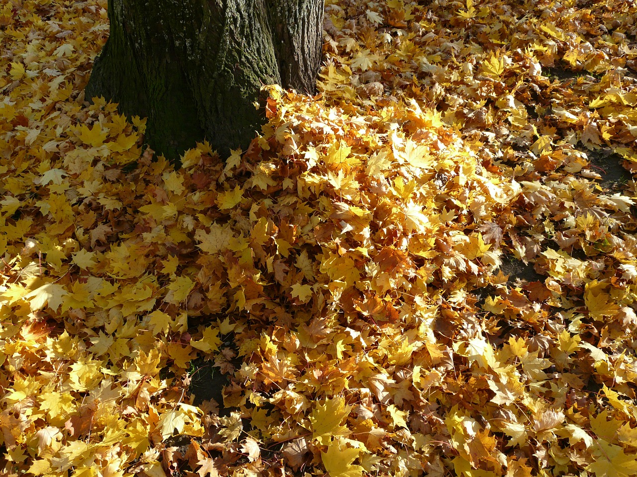 pile of leaves improving soil